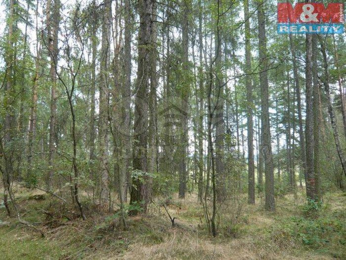 Prodej, les, 8811 m2, Smržov