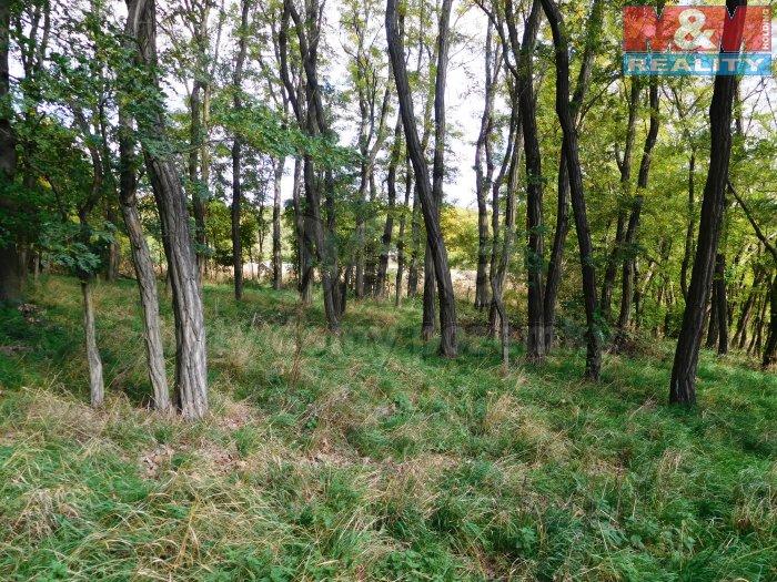 Prodej, les, 8301 m2, Žďárec, okr. Brno - venkov