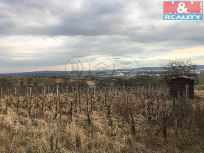 Prodej, vinice, 804 m2, Hustopeče