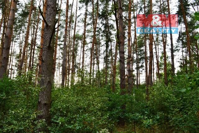 Prodej, les, 7909 m2, Choceň - Plchůvky