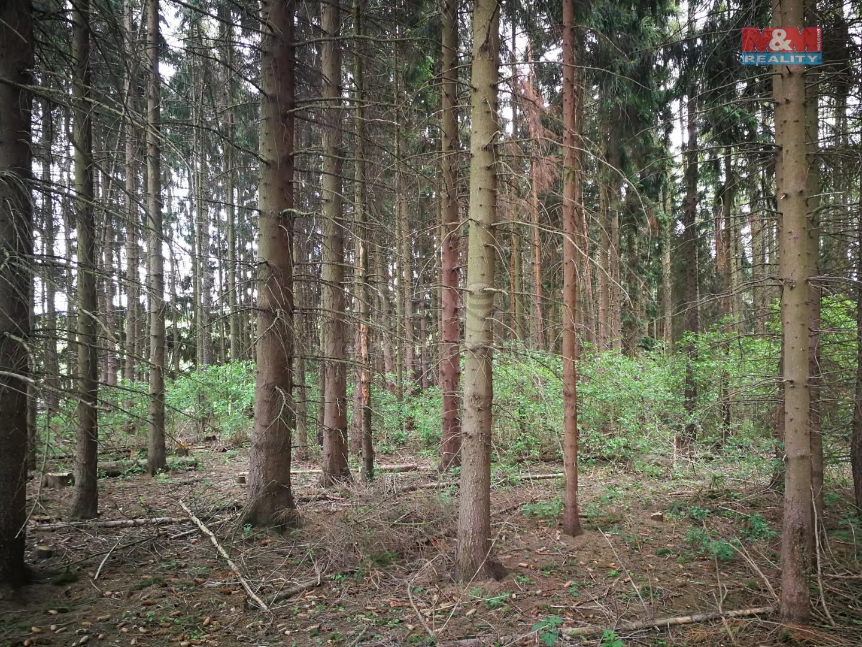 Prodej, les, 24455 m2, Rohozná u Poličky