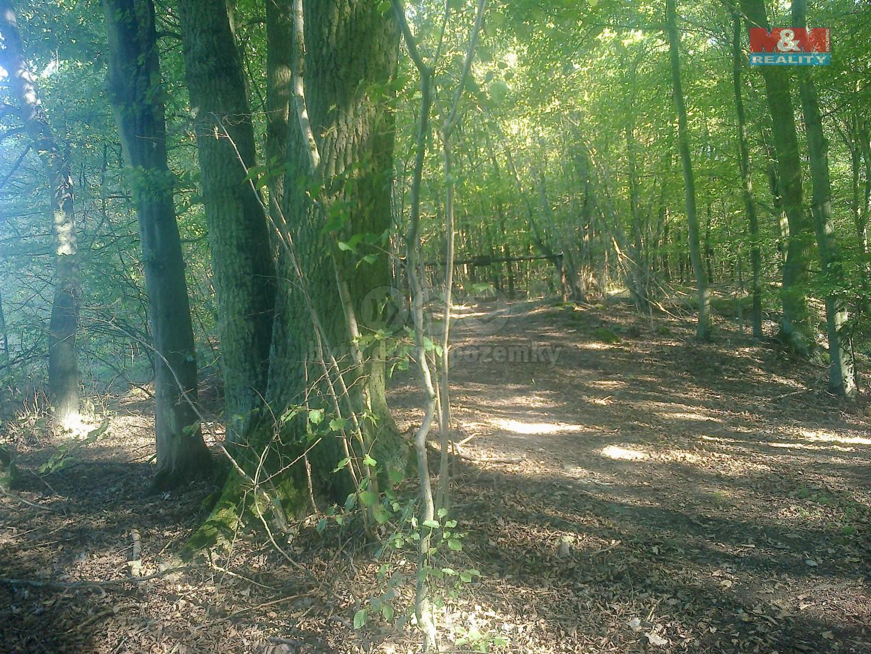 Prodej, les, 8301m2, Žďárec u Tišnova
