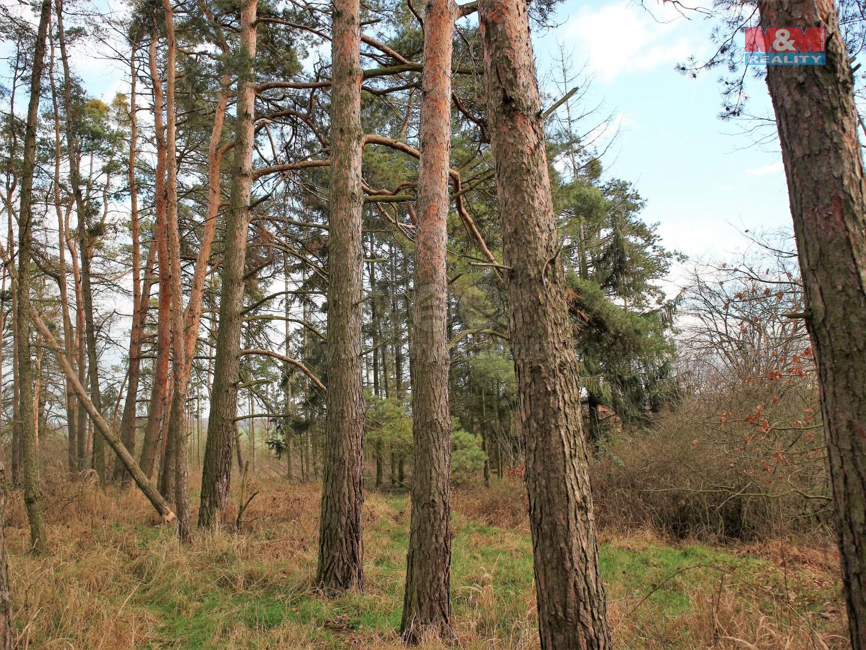 Prodej lesa, 5521 m², Přelouč