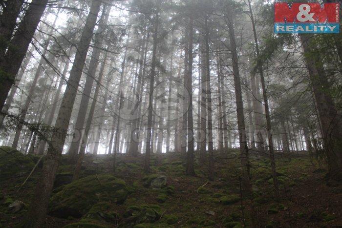 (Prodej, les, 11794 m2, Strašín), foto 1/5