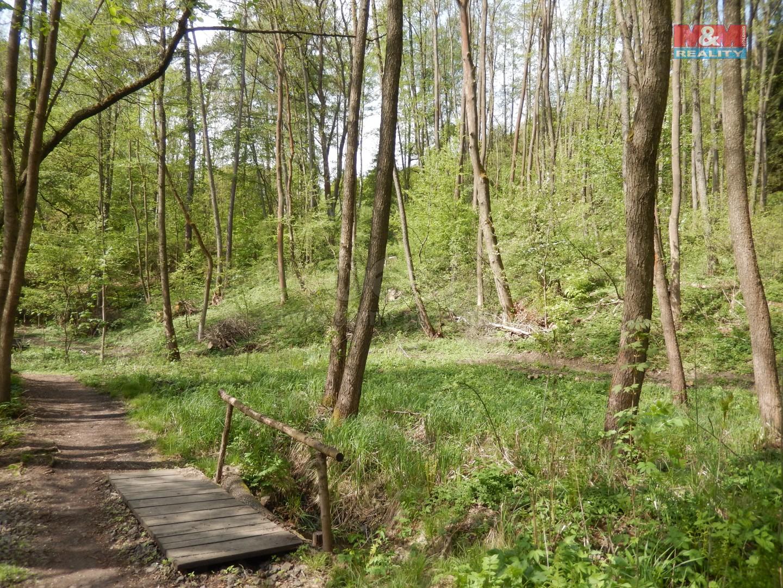 Les  (Prodej, les, 4628 m2, Hrubá Skála), foto 1/14