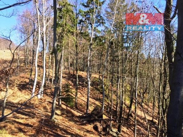 L3 (Prodej, les, 23760 m2, Kounov u Dobrušky), foto 1/10