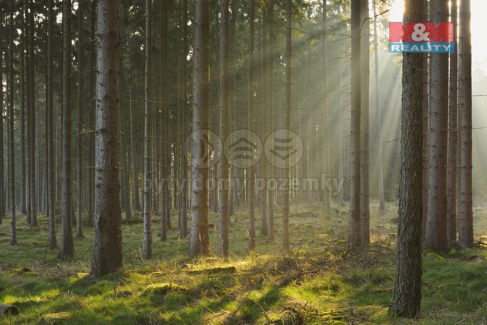 Prodej, lesní pozemek, Rusava