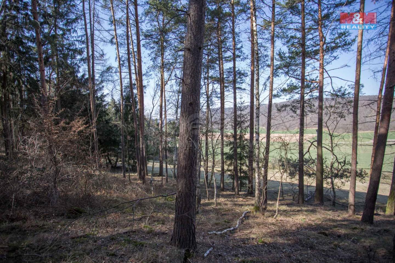 Prodej, les, Předklášteří