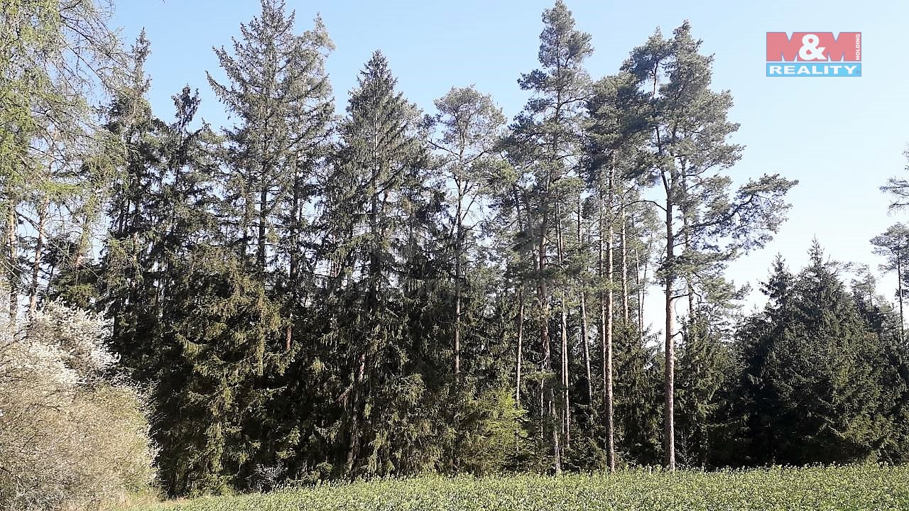 Prodej, les, 2693 m2, Ctidružice