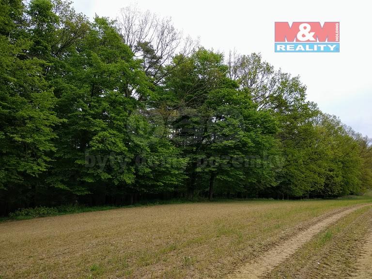 Prodej, les, 11127 m2, Velká Polom