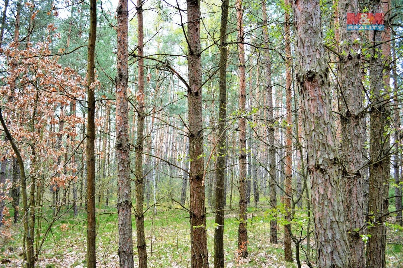 Prodej, les, 7909 m2, Choceň
