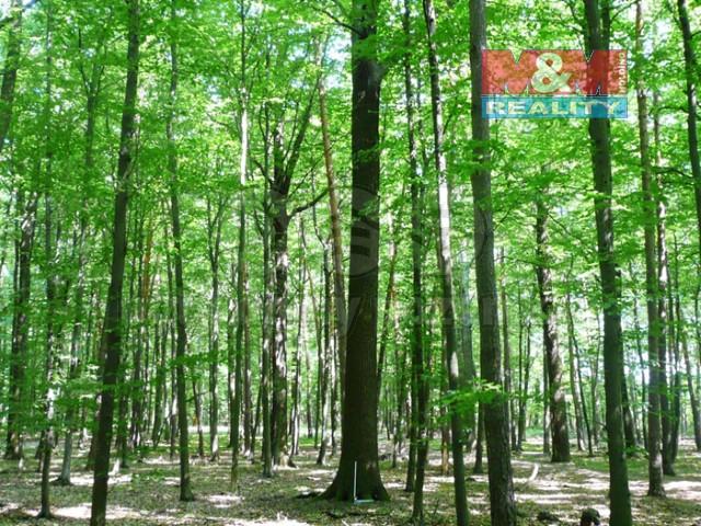 Prodej, les, 6132 m², Vršovice