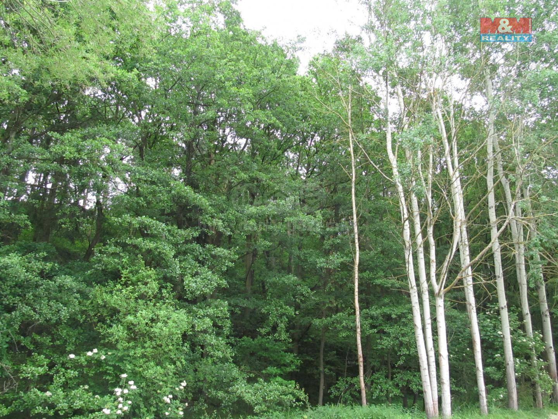 Prodej lesa, 3835 m², Písek - Hradiště