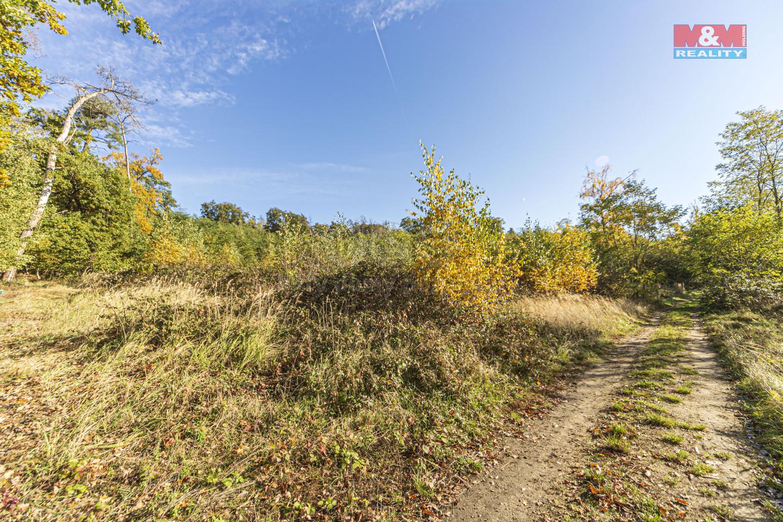 Prodej lesa, 2565 m², Svatý Mikuláš