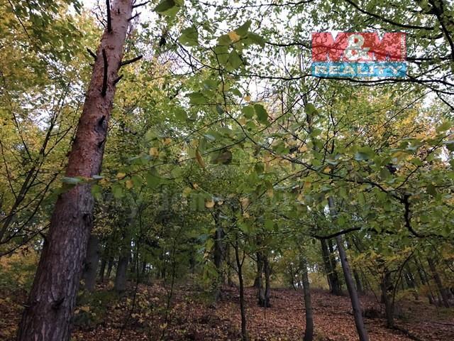 Prodej lesa, Hodkovice nad Mohelkou