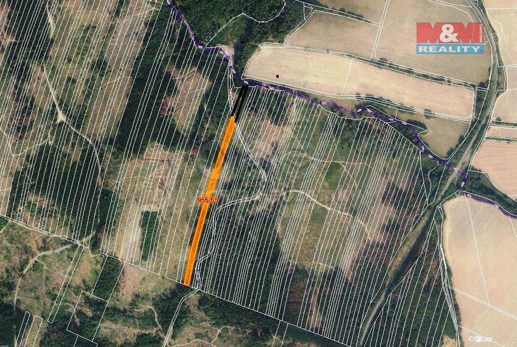 Prodej lesa, 6647 m², Nová Hradečná