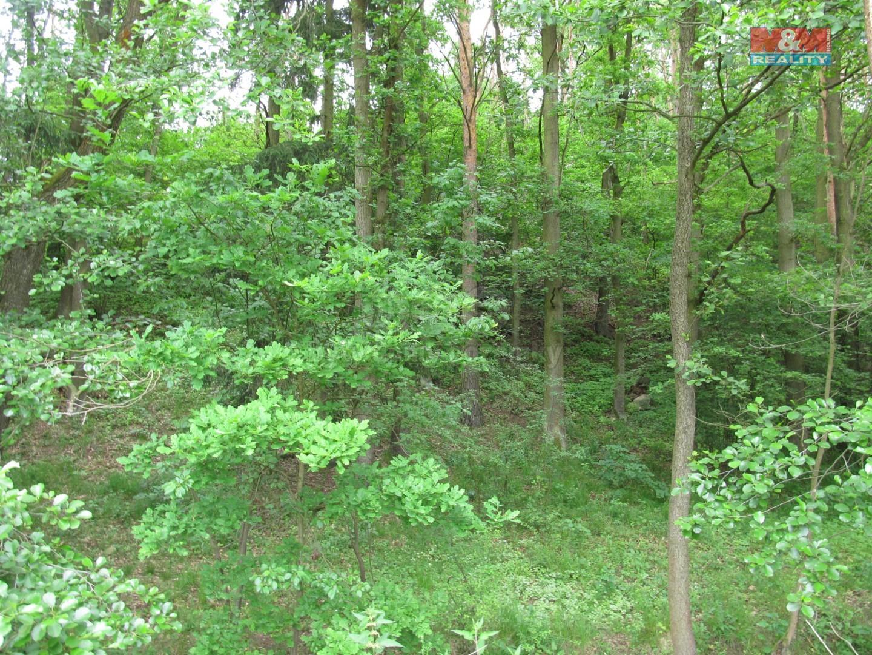 Prodej lesa, 2493 m², Písek