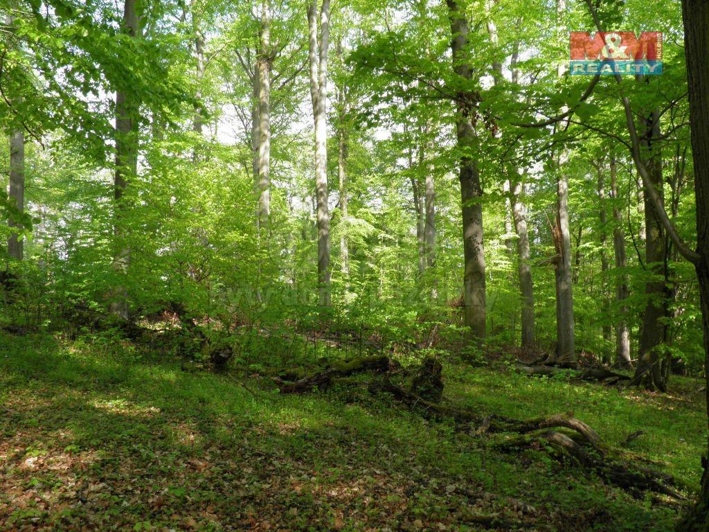 Prodej lesa, 13611 m², Povrly