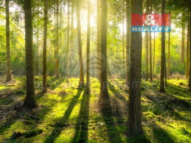 Prodej lesa, 213262 m², Bílá