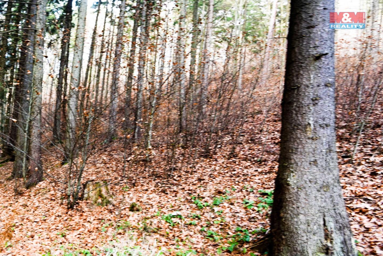 Prodej lesa, 10437 m², Lupěné