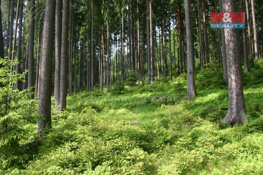 Prodej lesa, 160735 m², Frýdek-Místek