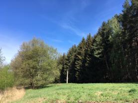 Prodej, les 5 240 m2, Buřenice