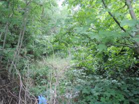 DSCN2687 (Prodej, pozemek, 455 m2, Velvary), foto 4/19