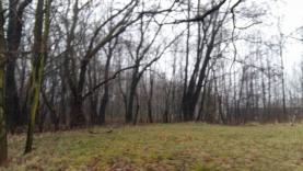 12476636_10206038368138252_341220386_o (Prodej, lesní pozemek, 2661 m2, Ostrava), foto 4/4
