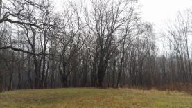 Prodej, lesní pozemek, 2661 m2, Ostrava