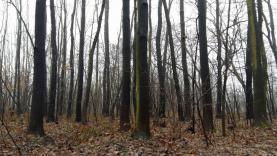 12499048_10206038367658240_896070903_o (Prodej, lesní pozemek, 2661 m2, Ostrava), foto 2/4