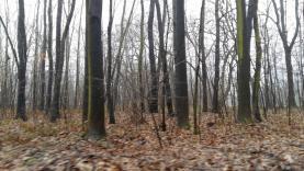 12443321_10206038367818244_883872058_o (Prodej, lesní pozemek, 2661 m2, Ostrava), foto 3/4