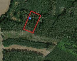Prodej, les, 2362 m2, Písty u Nymburka