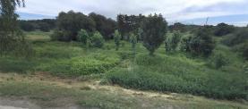 Prodej, trvalý travní porost, 11668 m2, Obříství