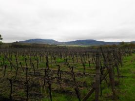Prodej, vinice, 13508 m2, Dolní Dunajovice