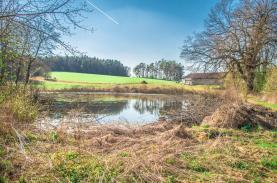 (Prodej, rybník, 4873 m2, Olbramovice - Křešice u Olbramovic), foto 2/7