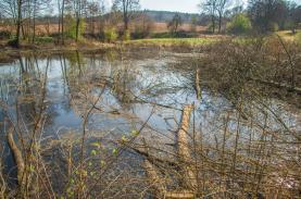 (Prodej, rybník, 4873 m2, Olbramovice - Křešice u Olbramovic), foto 4/7