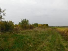 cesta (Prodej, orná půda, 4264 m2, Dubeč), foto 4/7