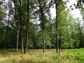 Prodej, les, 31,18 ha, okr. Břeclav