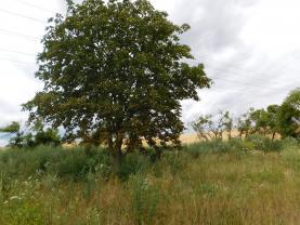 DSCN4551 (Prodej, orná půda, 5359 m2, Hřebeč), foto 3/4