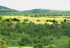 Prodej, pozemek, 14574 m2, Chvalnov - Lísky