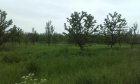 Prodej, pozemek, 15000 m2, Hranice
