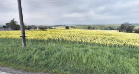 pozemek v reálu (Prodej, stavební pozemek, 983 m2, Koryčany, Blišice), foto 3/3