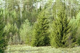 Prodej, les, Služátky