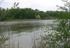 Prodej, rybník, 30307 m2, Uhelná Příbram, Chotěboř