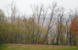 Prodej, lesní pozemek, 14013 m2, Ivančice