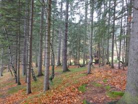 Prodej, les, 9398 m2, Prostřední Bečva