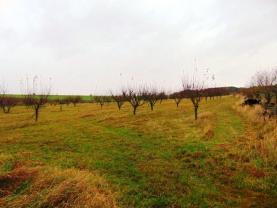 Pronájem, ovocný sad, Lysá nad Labem
