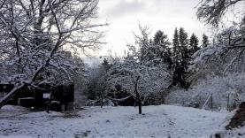 Prodej, zahrada, 875 m2, Planá - Vysoké Sedliště