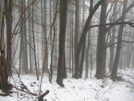 Prodej, les, 12944 m2, Dolní Bečva