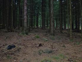 (Prodej, les, 48189 m2, Horní Bečva), foto 4/9
